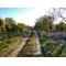 Садовый участок 9 соток в Феодосии,   СТ «Труд»