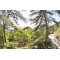 Участок поселок Сосняк Сосновый бор Ялта