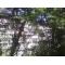 Продам 1 к.  квартиру в тихом зеленом р-не рядом с центром Ялты.